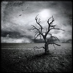 Image for 'Tree Of Woe'