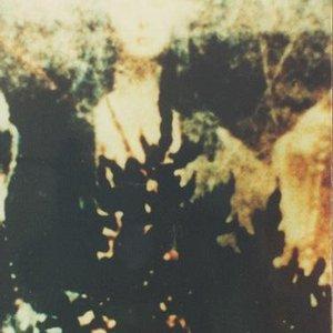 Bild för 'Rapeworm'