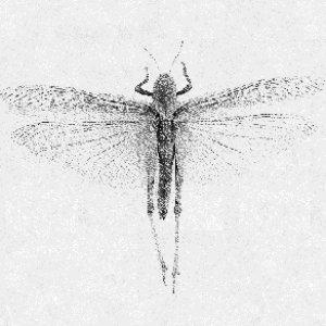 Image for 'Sweet Locust'