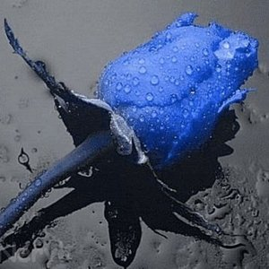 Image for 'Renata Gebara'
