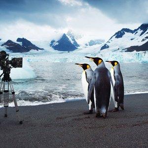 Image for 'Planet Penguin'