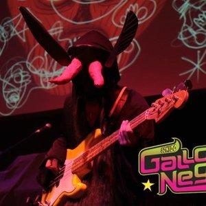 Image for 'Sonido Gallo Negro'