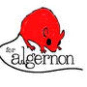 Image pour 'For Algernon'