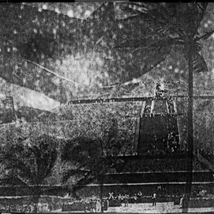 Image for 'Arecaceae'