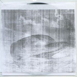 Image for 'Pan Dolphinic Dawn'