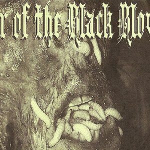 Image for 'Lair Of The Black Blowfly'