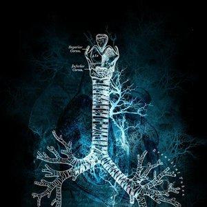Image for 'Frozen Echo'