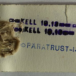 Image for 'Pära Trust'