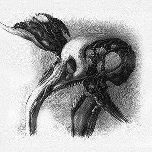 Image for 'Denovomutans'