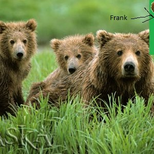 Image for 'Frank and the Bears'