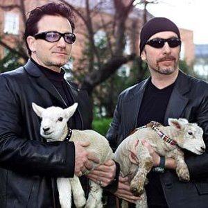 Image pour 'Bono & The Edge'