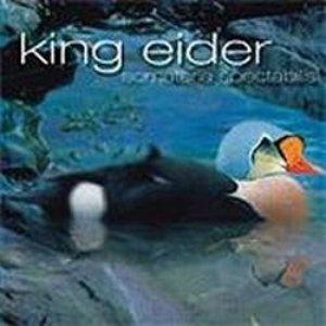 Imagem de 'King Eider'