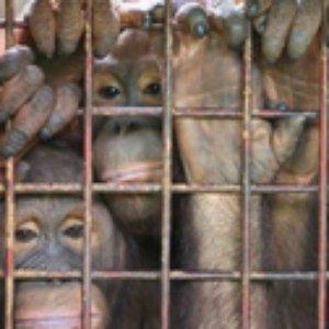 Image pour 'Långben Går På Zoo'