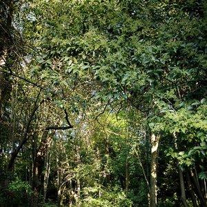 Image for 'Jardín de la Croix'