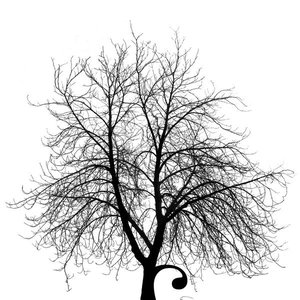 Image for 'Moneytree'
