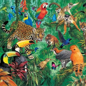 Image for 'PARROT JUNGLE 95'