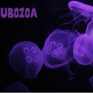 Image for 'Cubozoa'