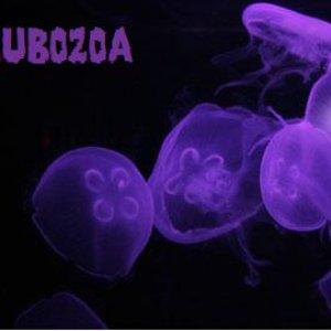 Bild für 'Cubozoa'