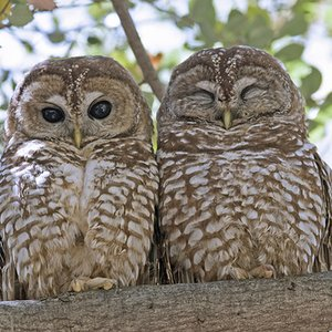 Image for 'Cornell Lab of Ornithology'