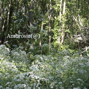 Image for 'Ambrosia(@)'