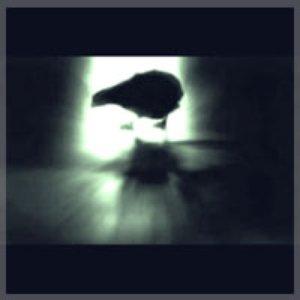 Image pour 'The Quail'