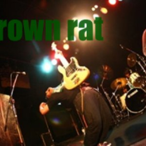 Bild für 'Brown rat'