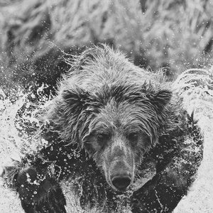 Image for 'Grizz'