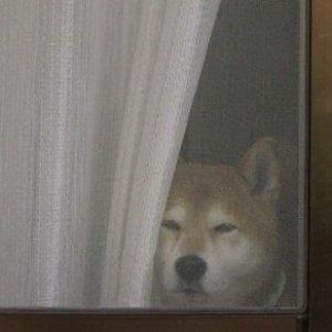 Image for 'howl jolson'