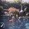 Underwater Peoples Summertime Showcase