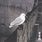 Yurikamome: 13 Japanese Birds Pt. 3
