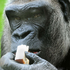 Avatar for Gorilla-