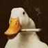 Avatar for 1000cigarettes
