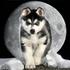 Avatar de rus_moon_wolf