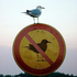 Avatar for BirdControl
