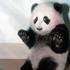 Avatar for smart_panda