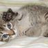 Avatar for kitten80