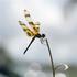 Avatar de monidelva