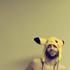 Avatar de lobo_tomizado