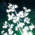 Avatar di Neon_Polychoron
