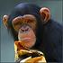 Avatar for simpanc