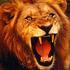 Avatar for lion1997