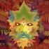 Avatar for jeroen-f