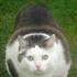Avatar for slowpard