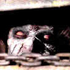 Avatar di -EvilDead-