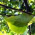 Avatar for enneverde