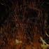 Avatar for Iskra-Pandora
