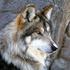 Avatar de Sexteppenwolf