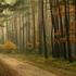 Avatar de Forestroad08