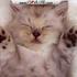 Avatar de kittykitty72
