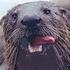 Avatar de Otterfan